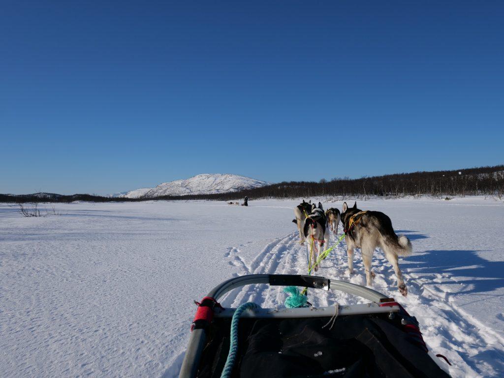 La gita in slitta con Senja Husly Adventure