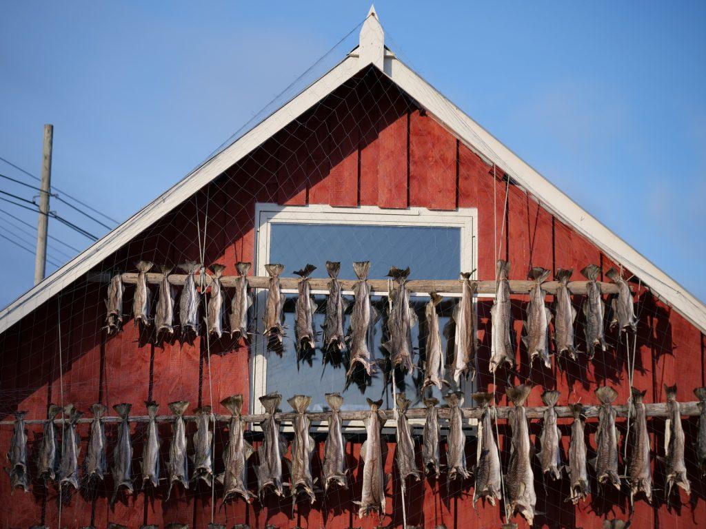 Merluzzi ad essiccare presso Botnhamn, Senja